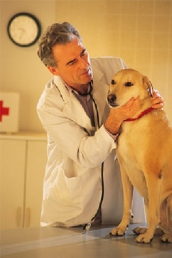 veterinarian is checking up on dog